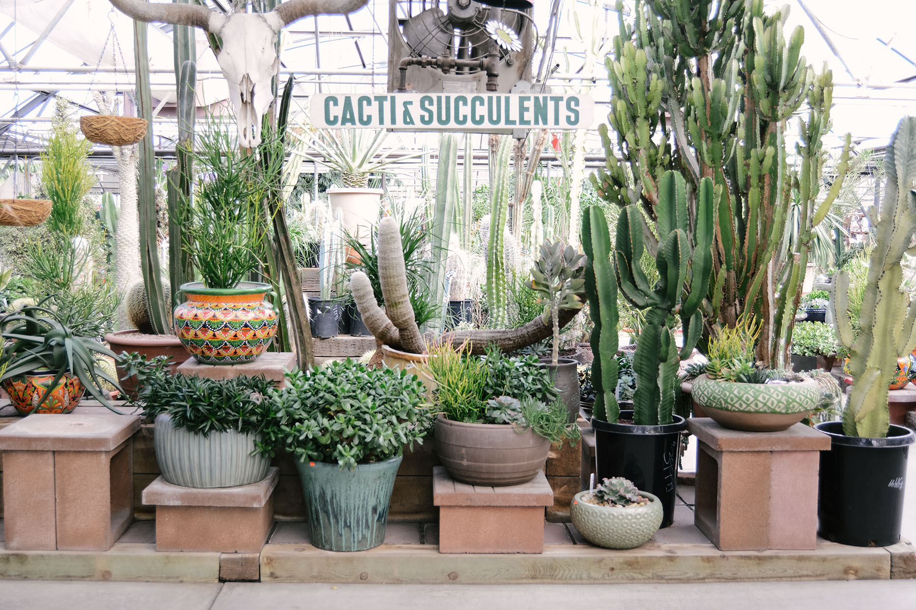 cacti-and-succulents-sm.jpg
