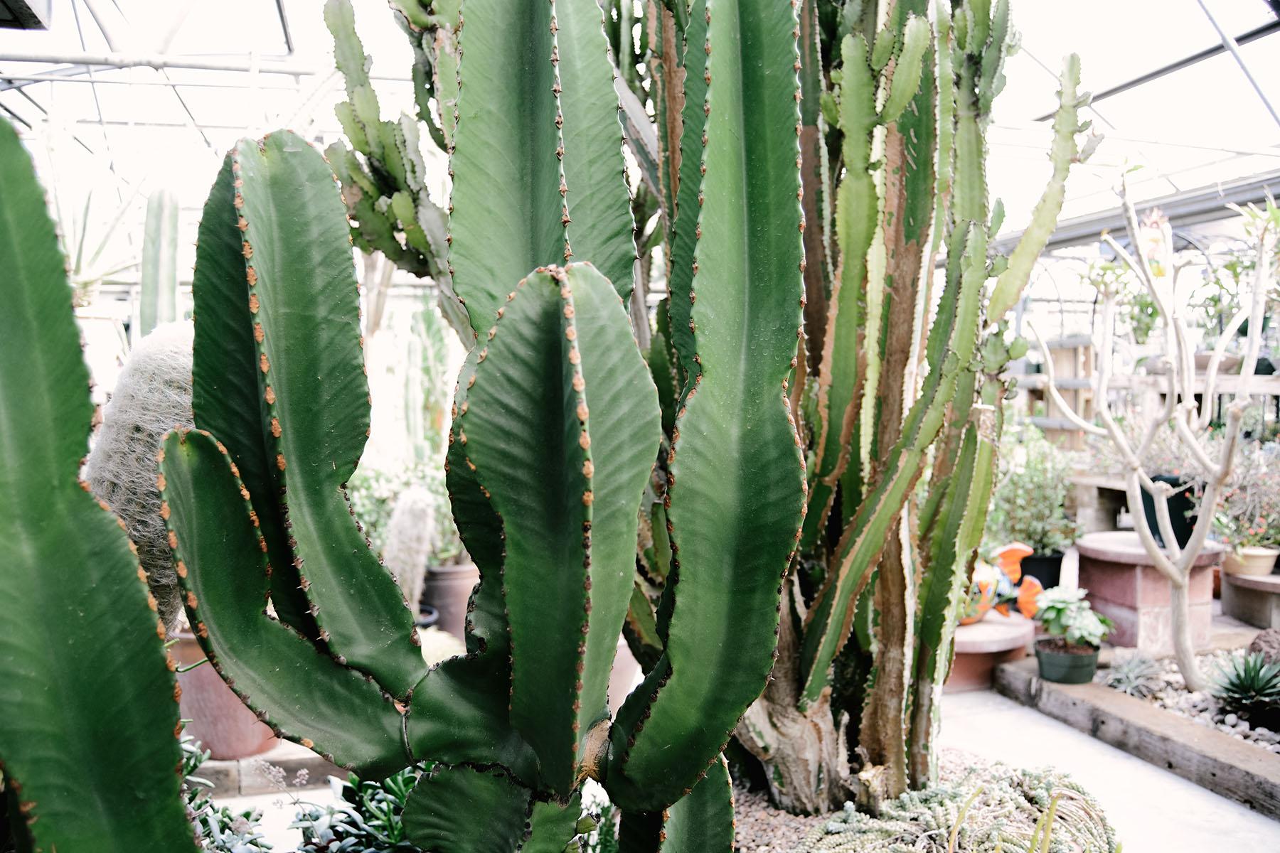 cactus-1-sm.jpg