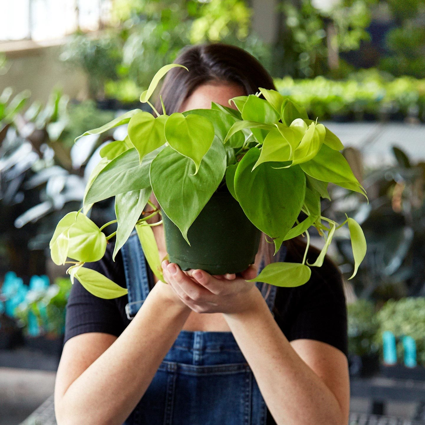 """for """"plantspiration"""" - Get those living spaces spring ready with plant tips from  The Sill . The site is full of plant care articles, access to plant experts, and a web shop where you can shop plants by category (from low light to pet friendly and best for beginners). They even do plant workshops at their store locations in NYC. The Sill believes """"Plants Make People Happy"""" and I certainly tend to agree."""