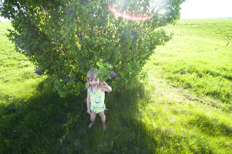 a.800.lilac.flower.gillie.DSC_5915.jpg