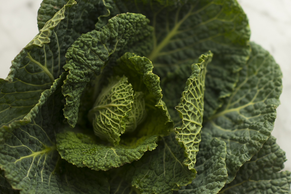 FAT-Steamed-Cabbage-Leave-Vancouver-Food-101.jpg