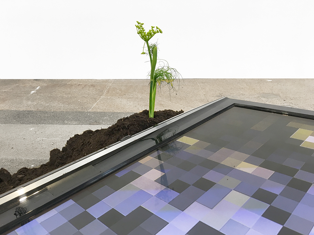 Meanwhile, At Home (Detail)   Installation View At Quartier General, Switzerland 2017, LCD, Screens, Soil, Plants, Cargo Net, Rubber Sandals