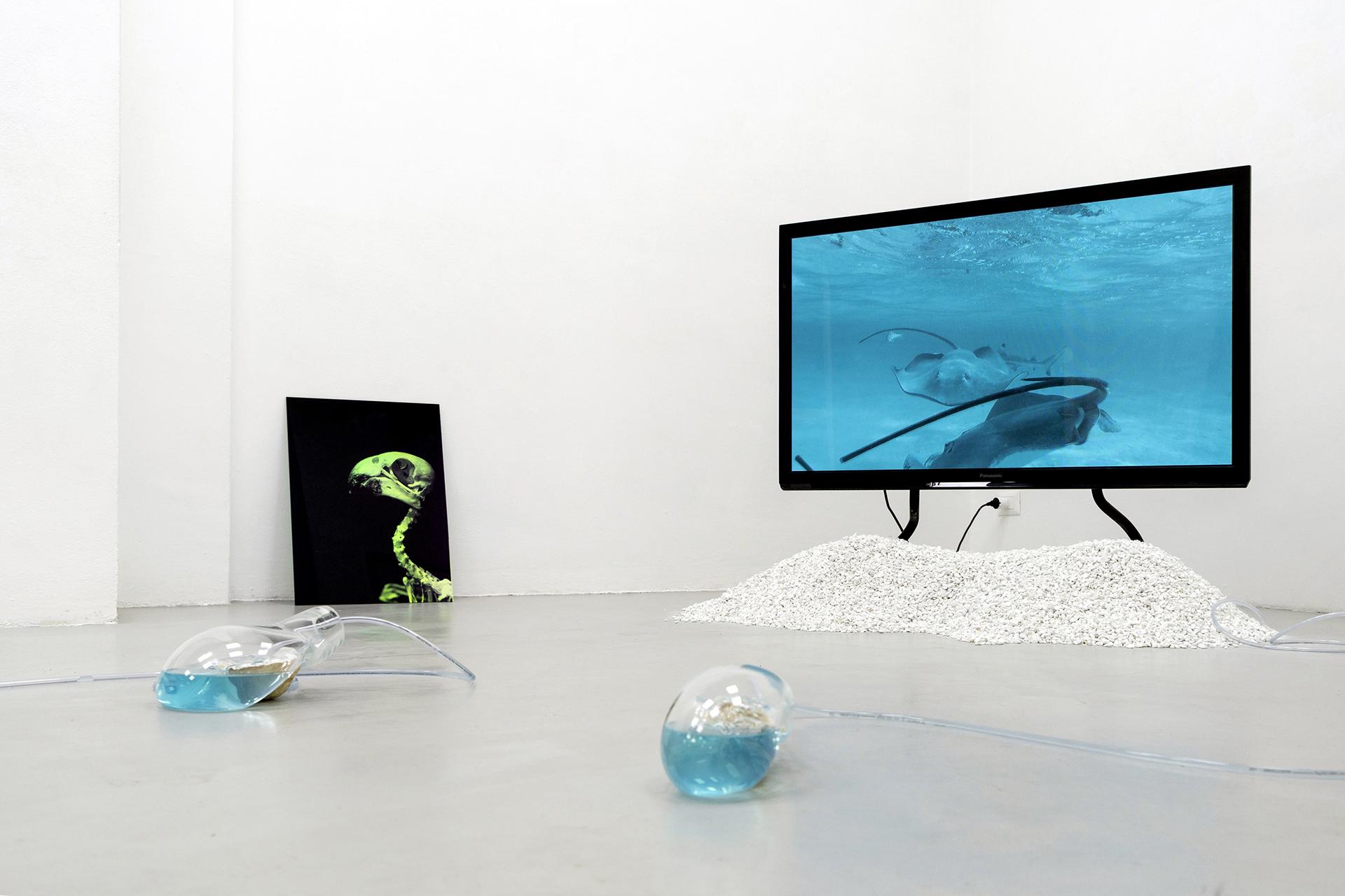 14-Paulo-Arraiano,-Sensorial-Divinities.-2019.-Exhibition-view.-Dimora-Artica-(ph-Cesare-Lopopolo).jpg