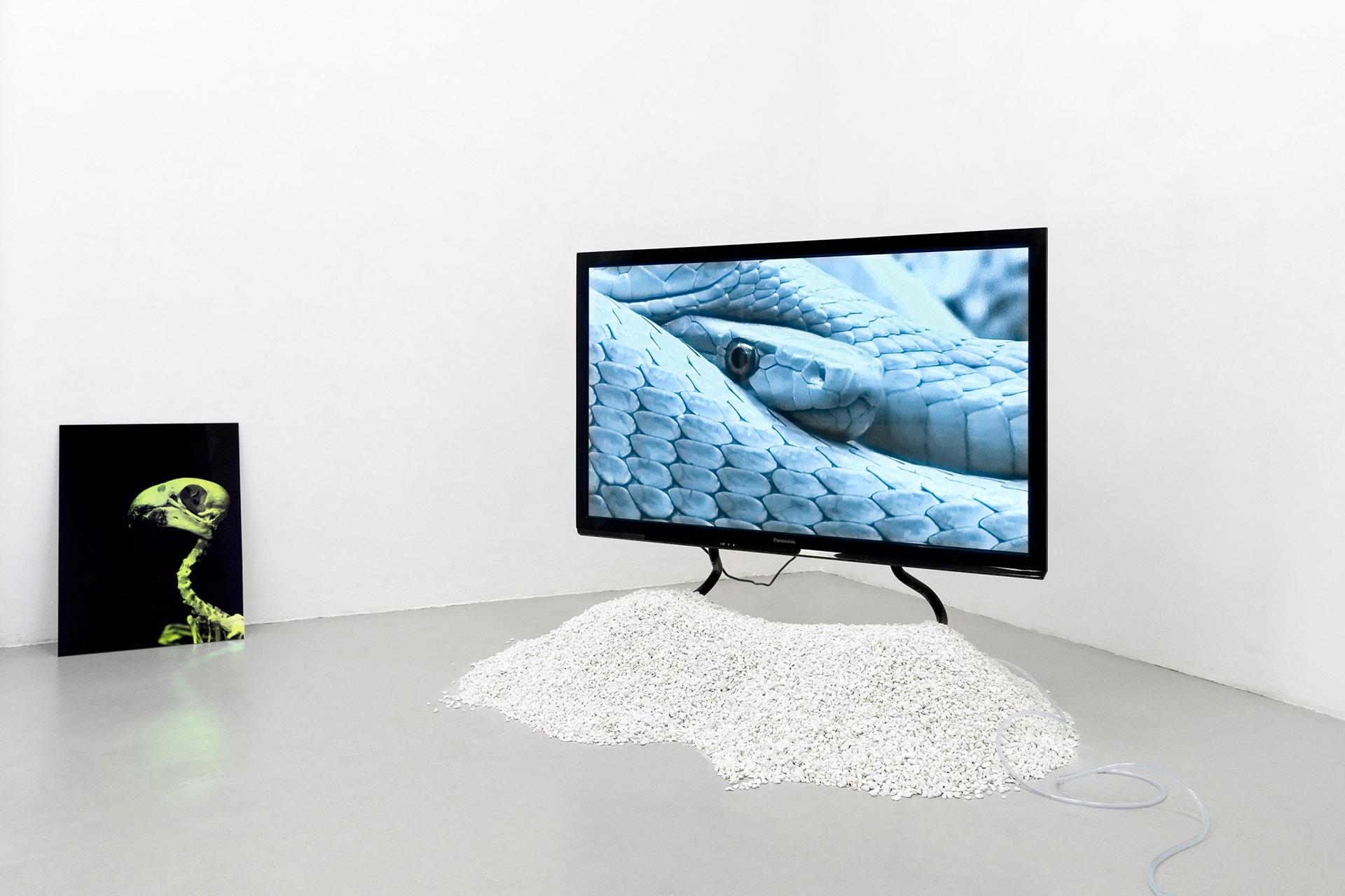 15-Paulo-Arraiano,-Sensorial-Divinities.-2019.-Exhibition-view.-Dimora-Artica-(ph-Cesare-Lopopolo).jpg