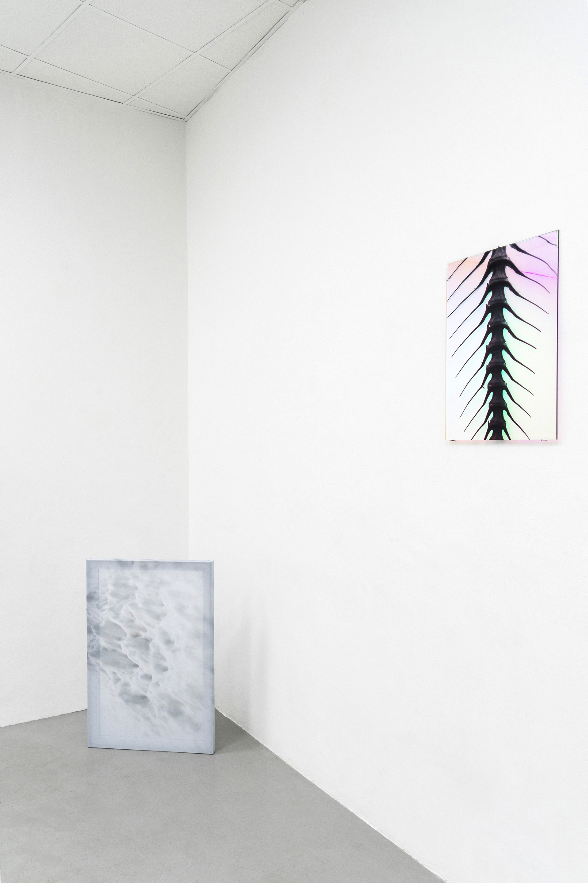 Sensorial Divinities  2019, Installation view at Dimora Artica, Milan