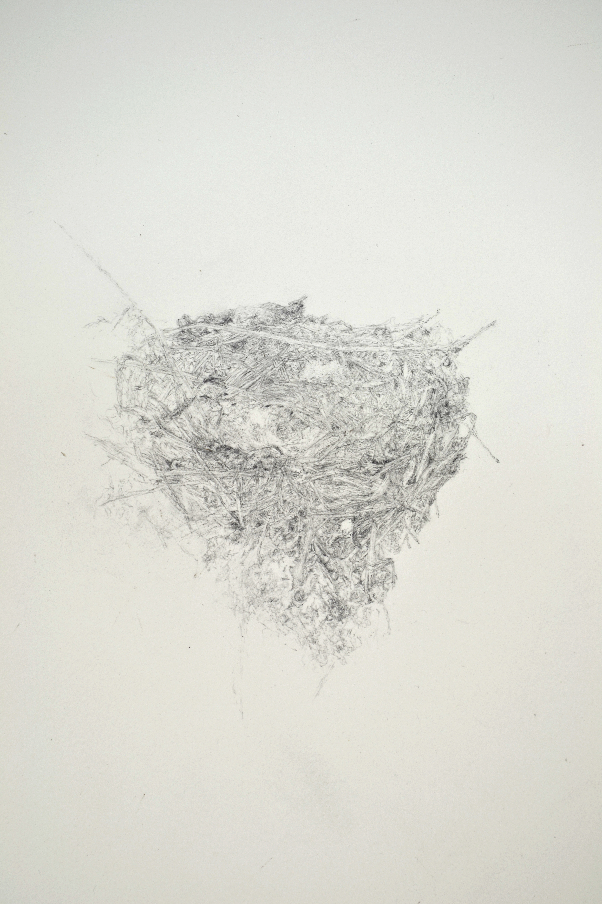 birdnest, (swallow detail)