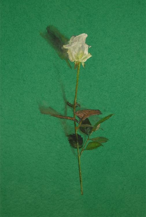 trompe l'oeil, single rose