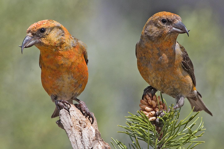 Photo credit:Elaine R. Wilson, via  http://www.naturespicsonline.com/