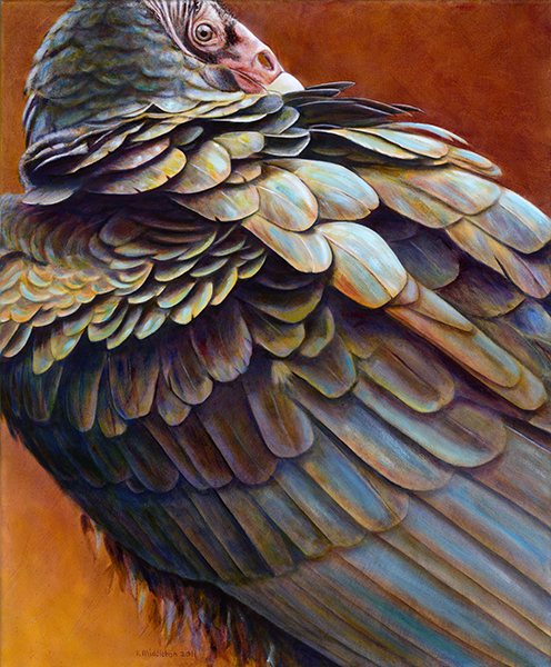 Turkey vultures really are gorgeous birds! My friend, the incredibly talented Kim Middleton agrees, and she did a wonderful job of capturing the iridescent beauty of their plumage. I love this painting, and I am grateful to Kim for allowing me to use it here.  Check out the rest of her work at www.kimmiddleton.com.  She's amazing!