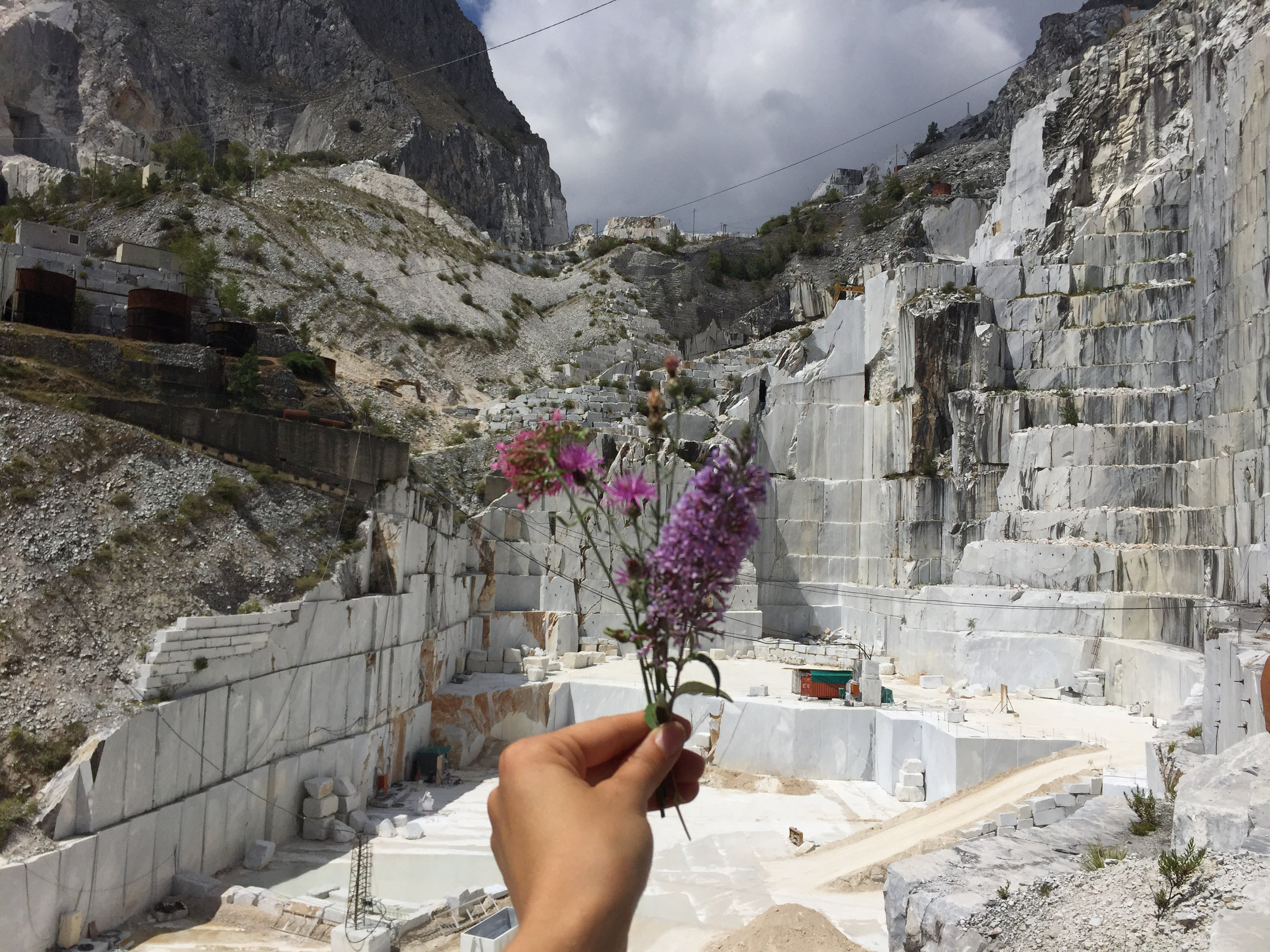 Carrara Quarry Wildflowers by Siri Thorson