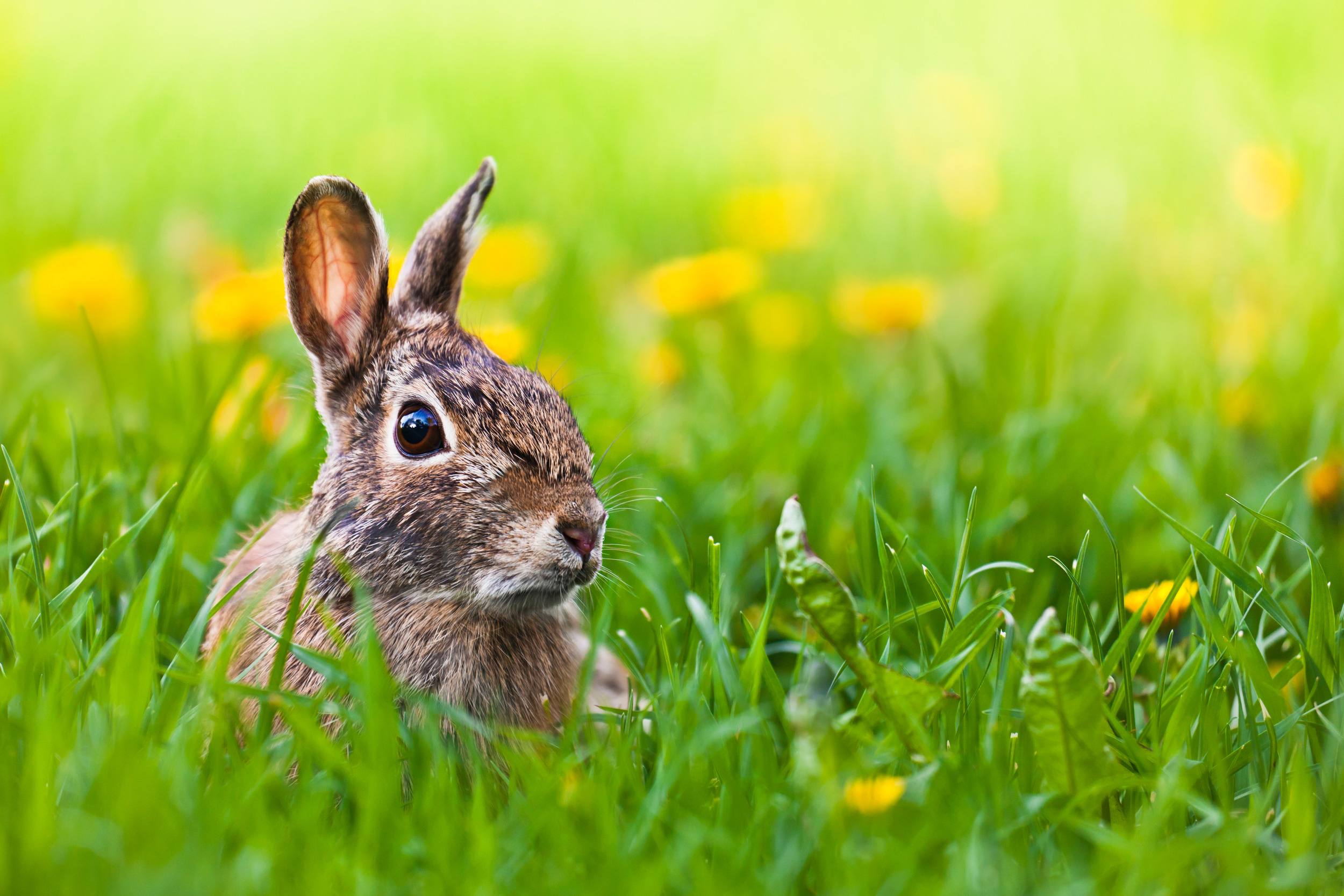 """"""" Late for Easter """" by  Benson Kua  is licensed under  CC BY-SA 2.0 ."""