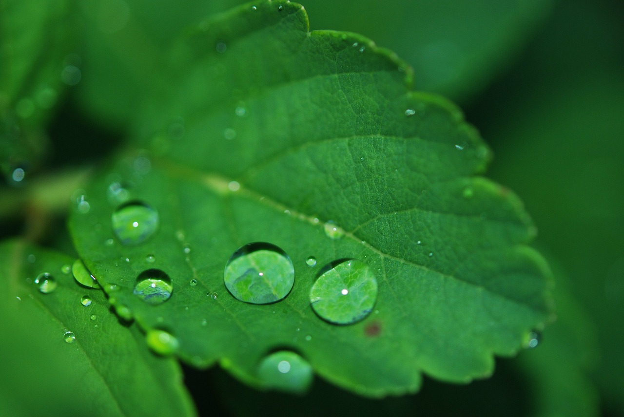 """"""" Dew, dewdrop, grass, green, nature """" by  LoggaWiggler  IS  public domain ."""