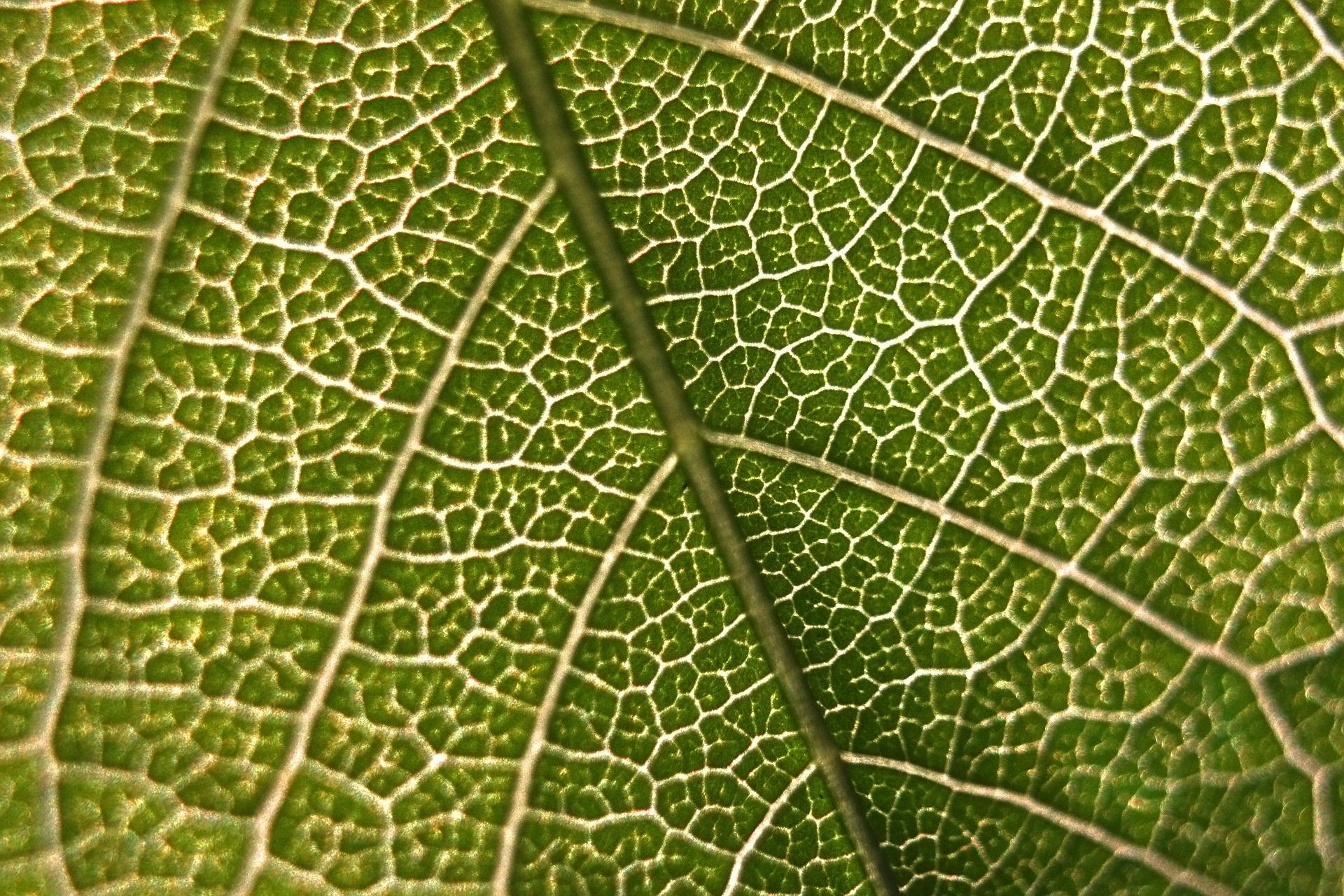 """ Leaf, macro, micro, green, nature "" by  Vadim Gromov  is  Public Domain ."