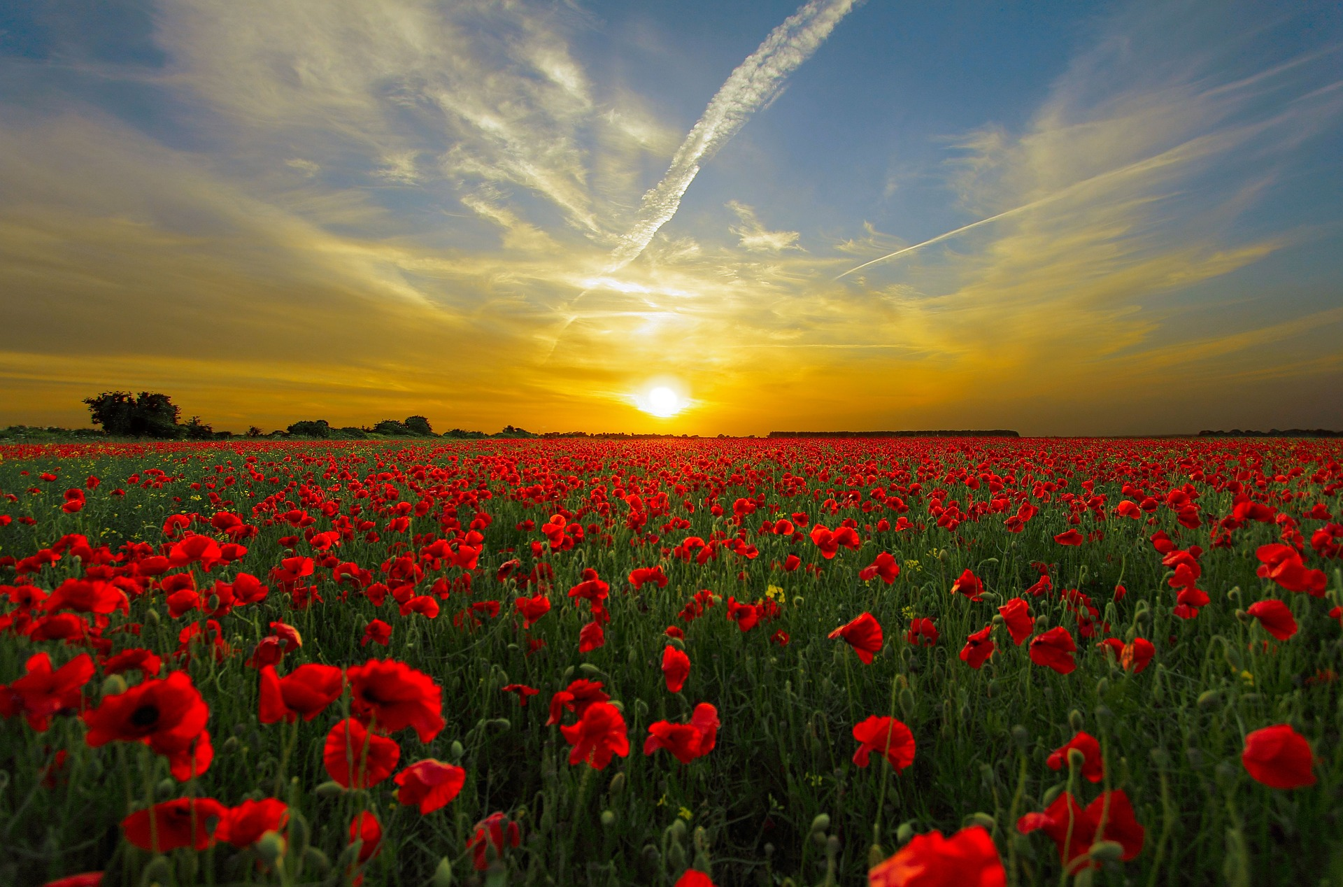 """ Sunset, field, poppy, sun, priroda "" by  Roman Grac  is  Public Domain ."