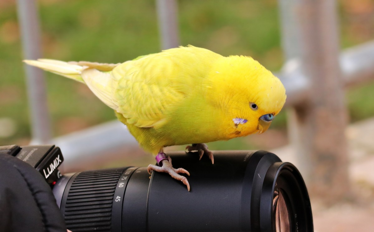 """ bird, animal, cute, beak, yellow, fauna... "" is  public domain ."