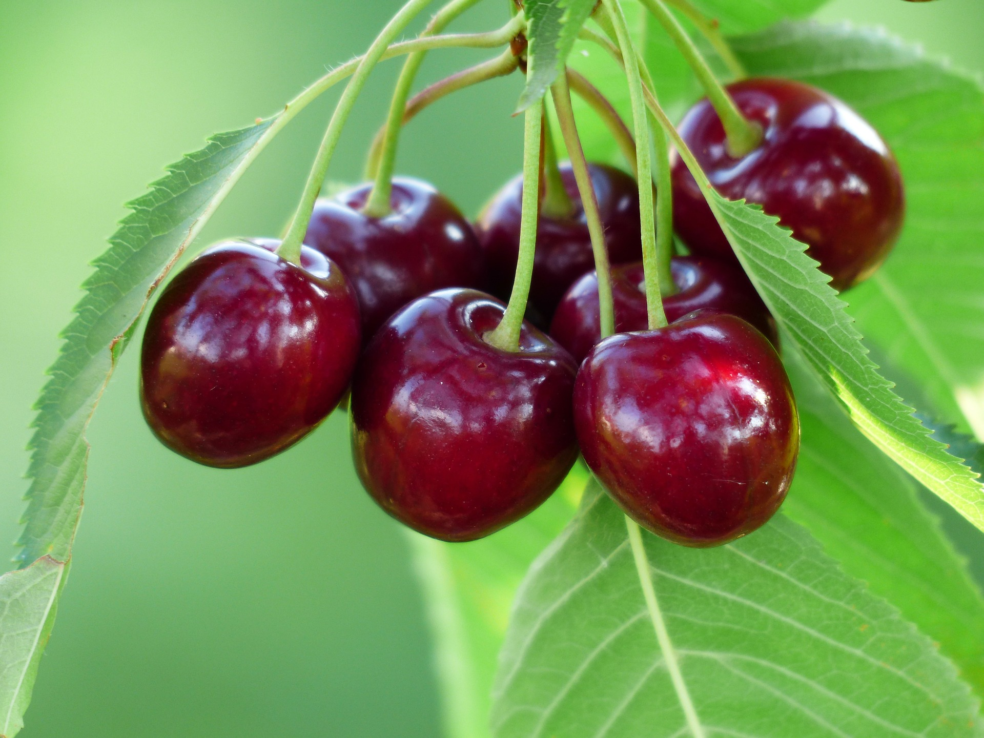 """ Cherry, sweet cherry, red, fruit "" by  Hans Braxmeier  is  Public Domain ."