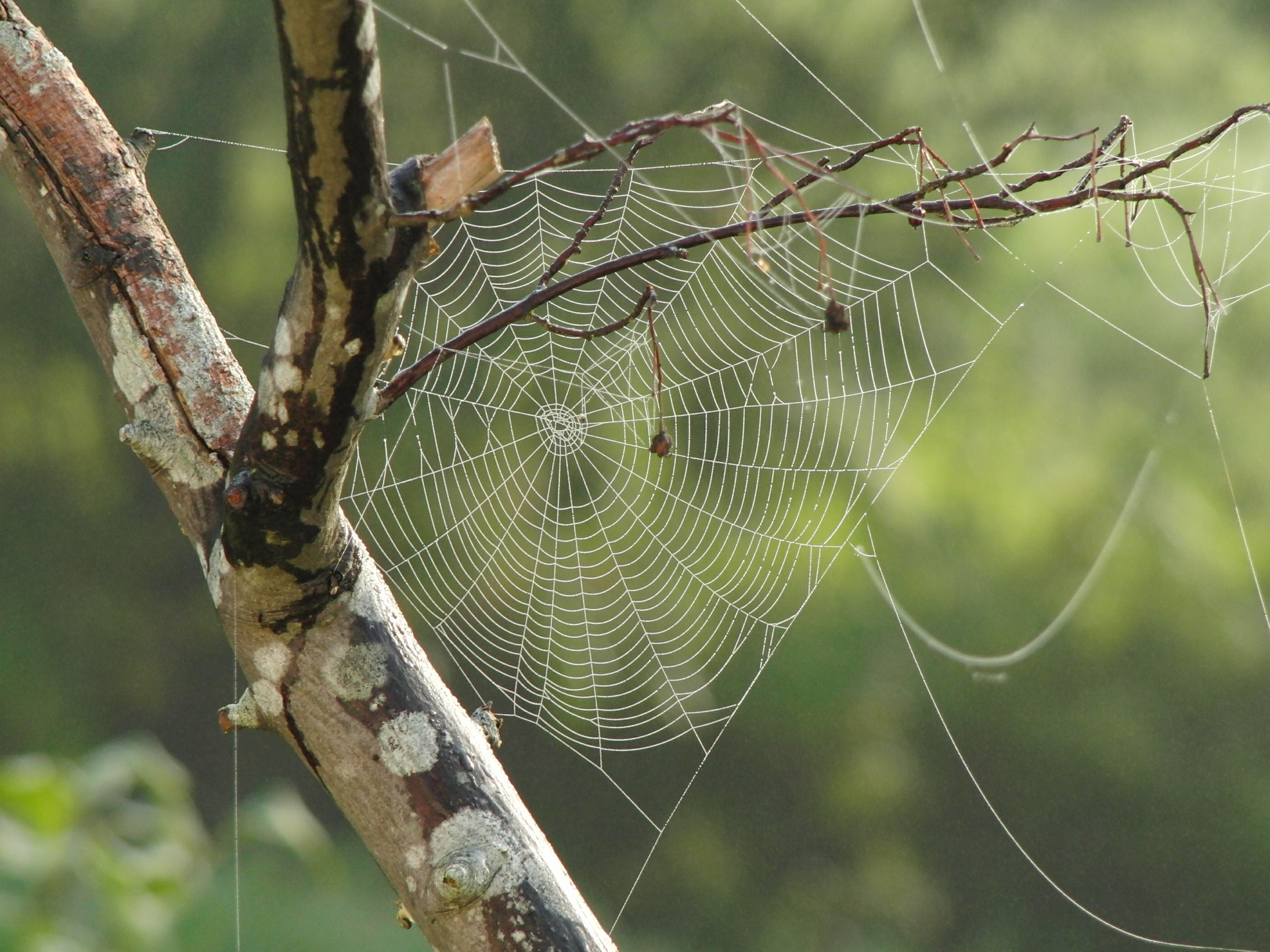 """ Spider, Web, Tree, Branches "" by  skeeze  is  Public Domain ."