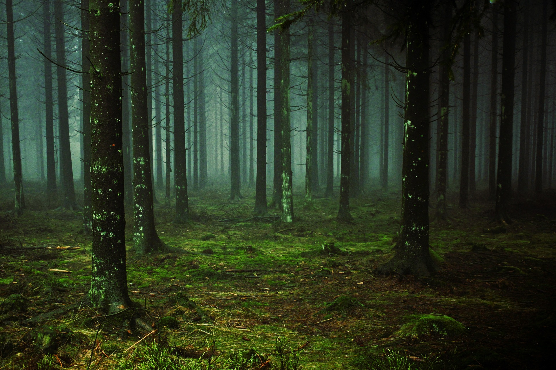 """ Forest, fog, tree, trunks "" by  Anja Osenberg  is  Public Domain ."