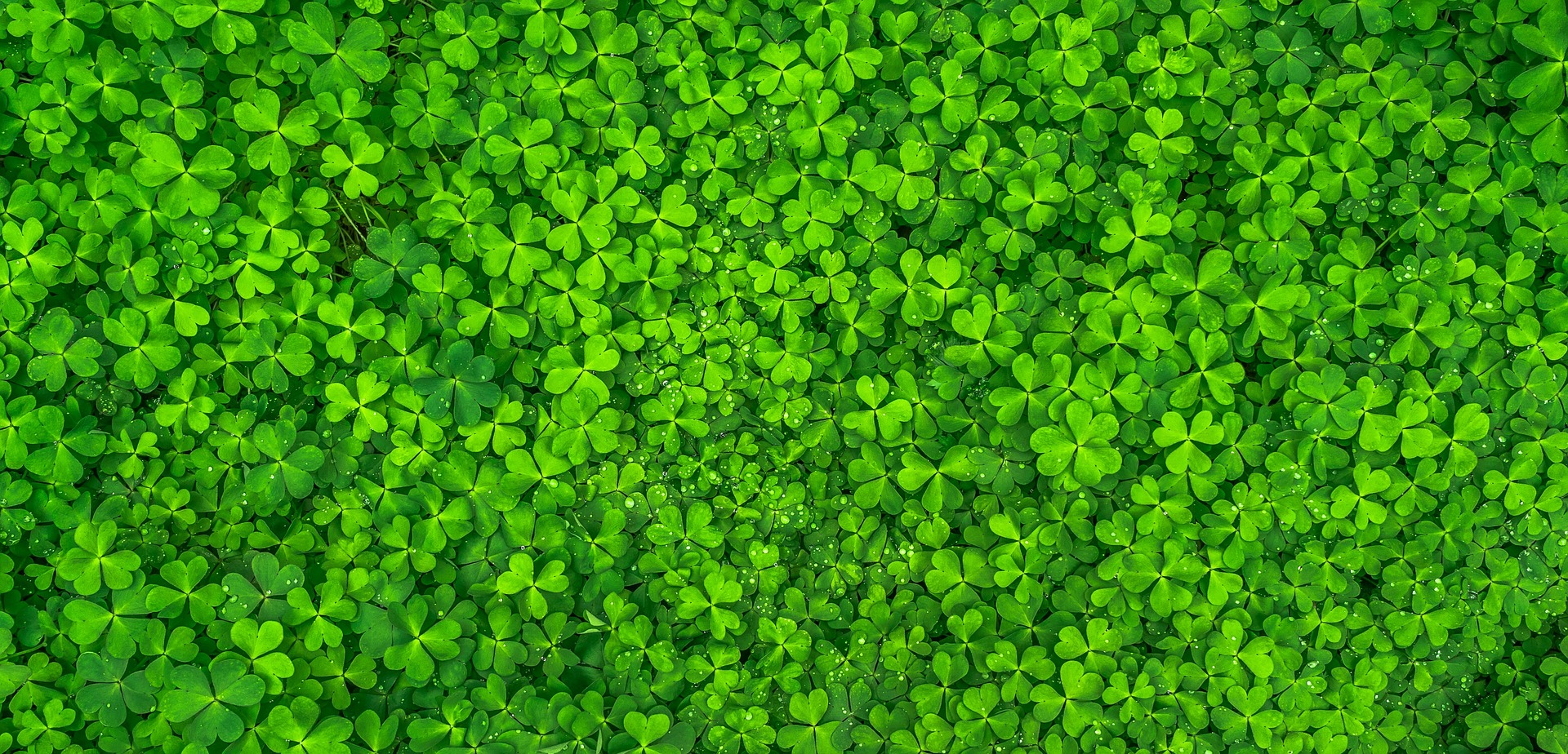 """ Leaf, clover, green "" by  Jeon Sang-O  is  licensed  by Pixabay."