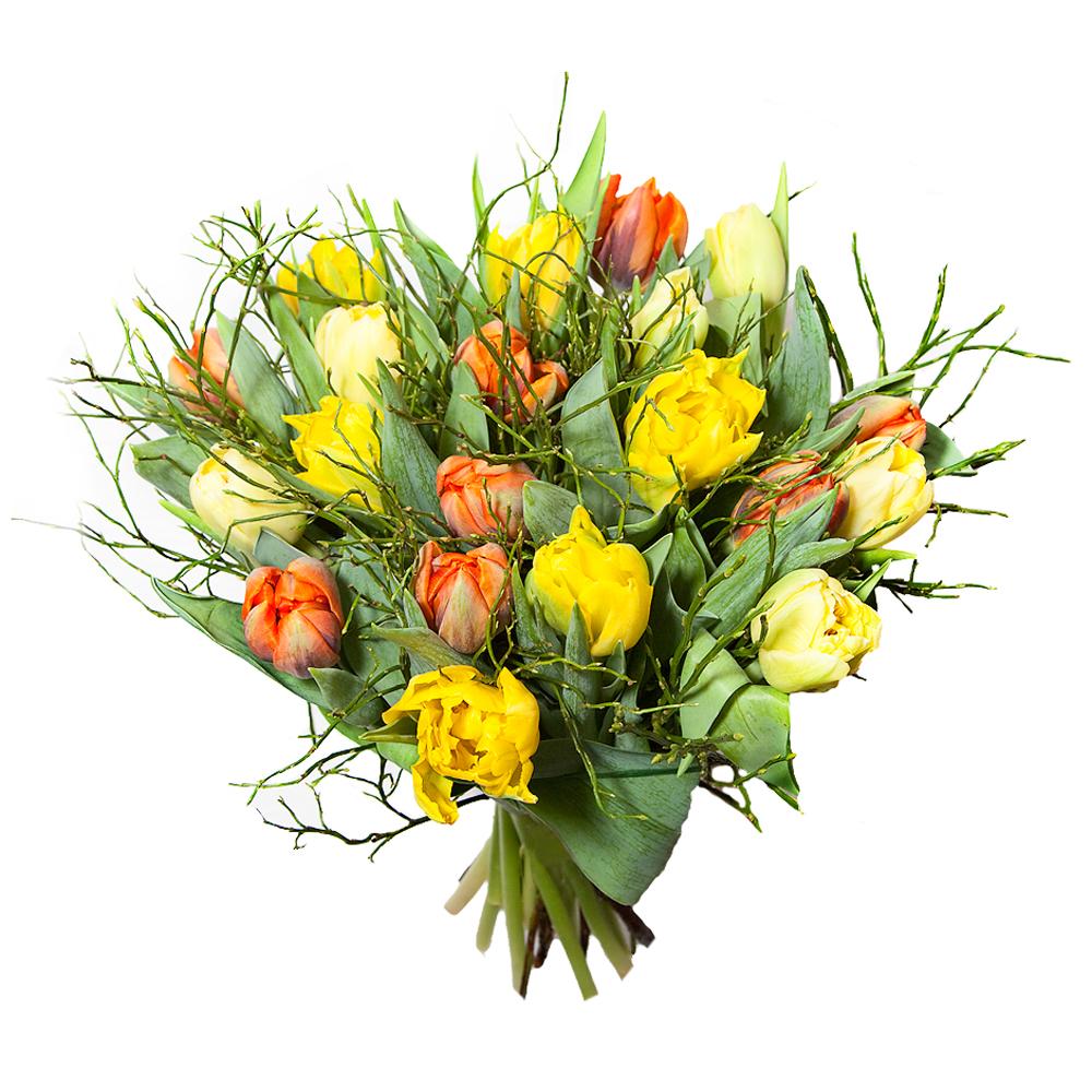 _tulpen2.jpg