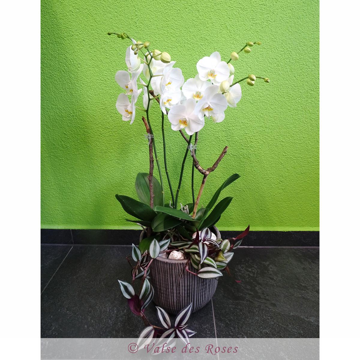 orchidDSC00490.jpg
