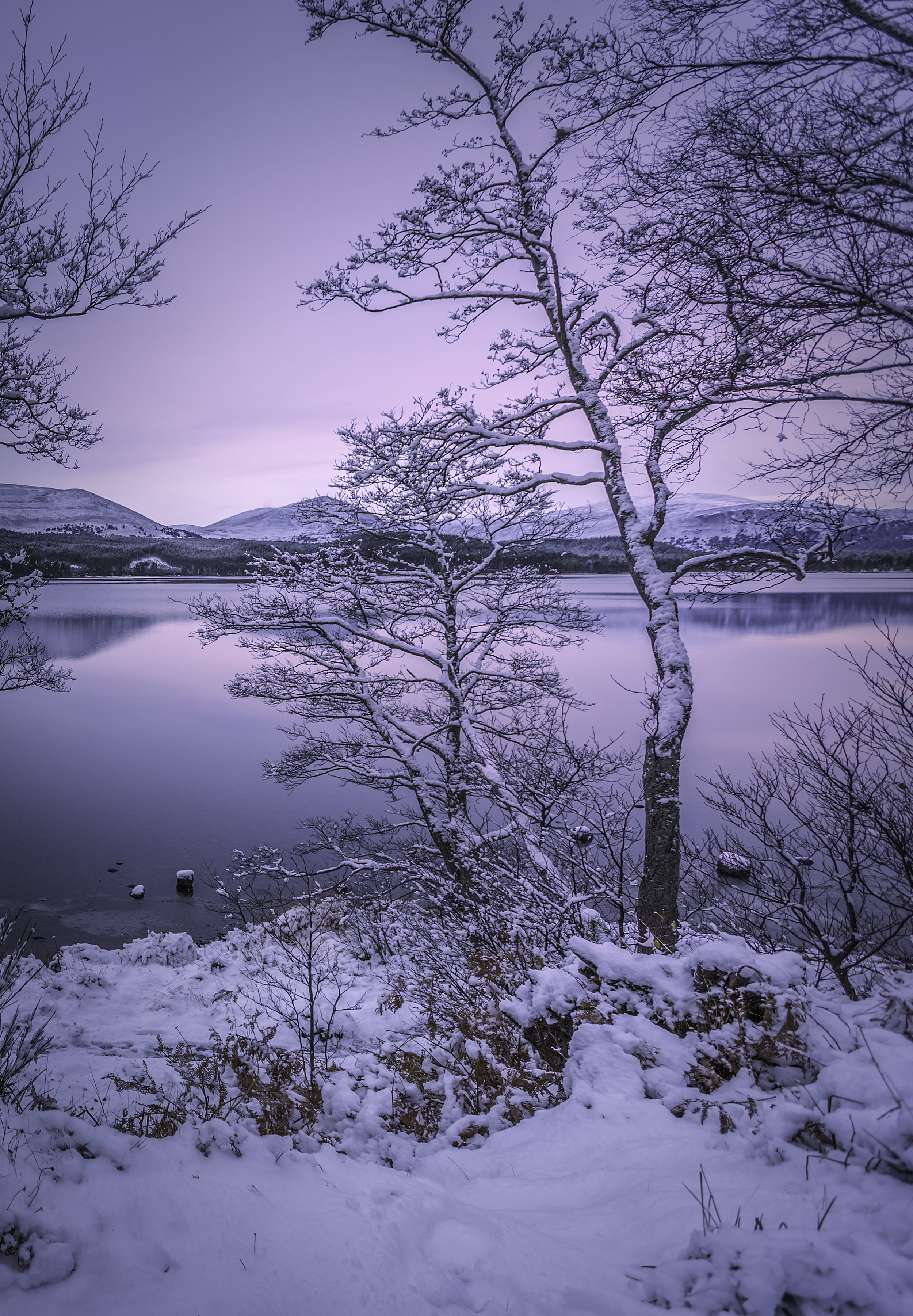Loch Morlich First Snow 2015.jpg