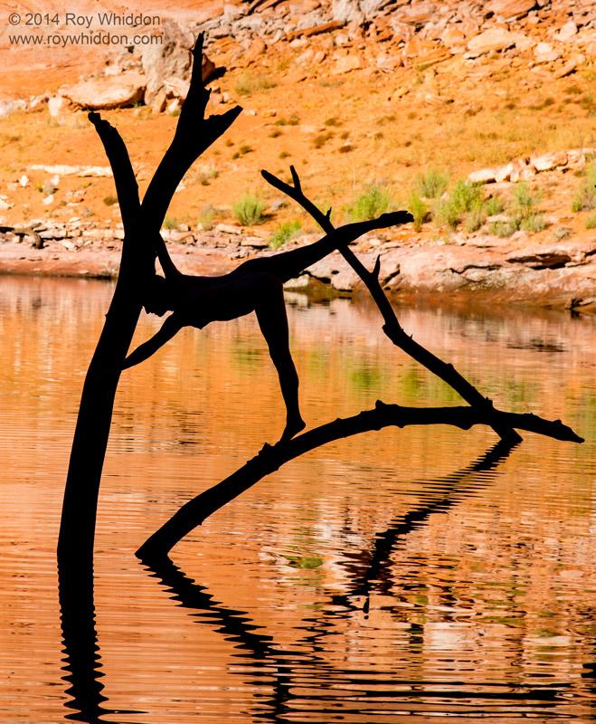 Limbs in the Lake II