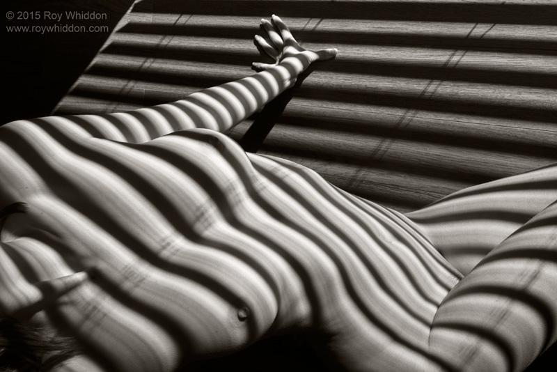 Shadow Waves II