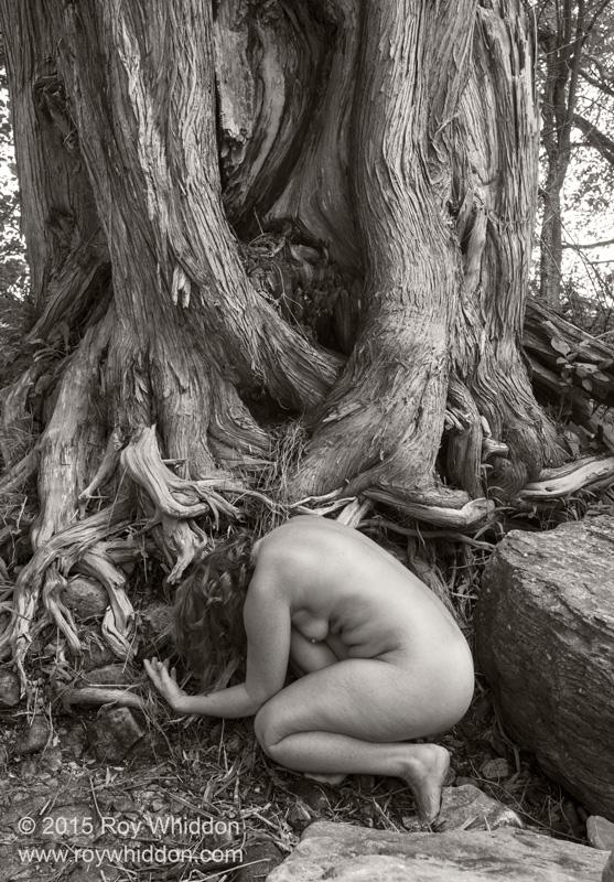 Roots I