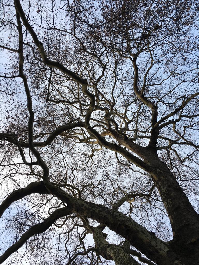 Richmond Park Poems