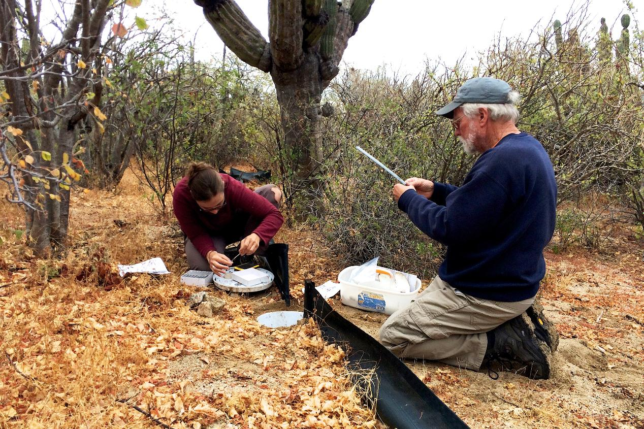 Herpetology team in action at Rancho Cacachilas, BCS