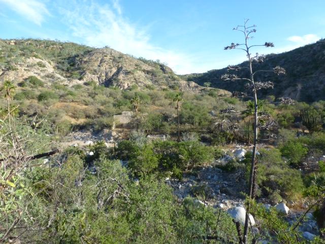 Comparación del cañón de Canoas en la época minera, y en la actualidad, solo permanecen ruinas. *