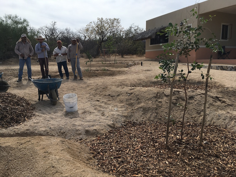 Permaculture Mexico