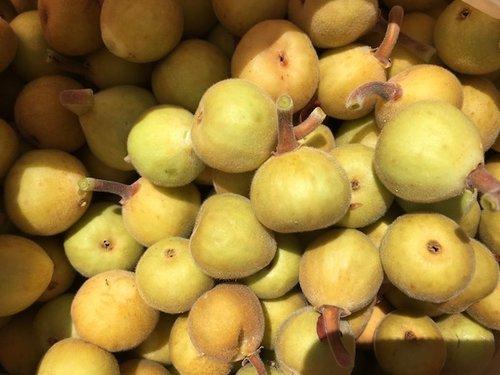 Cosecha de Frutos Silvestres