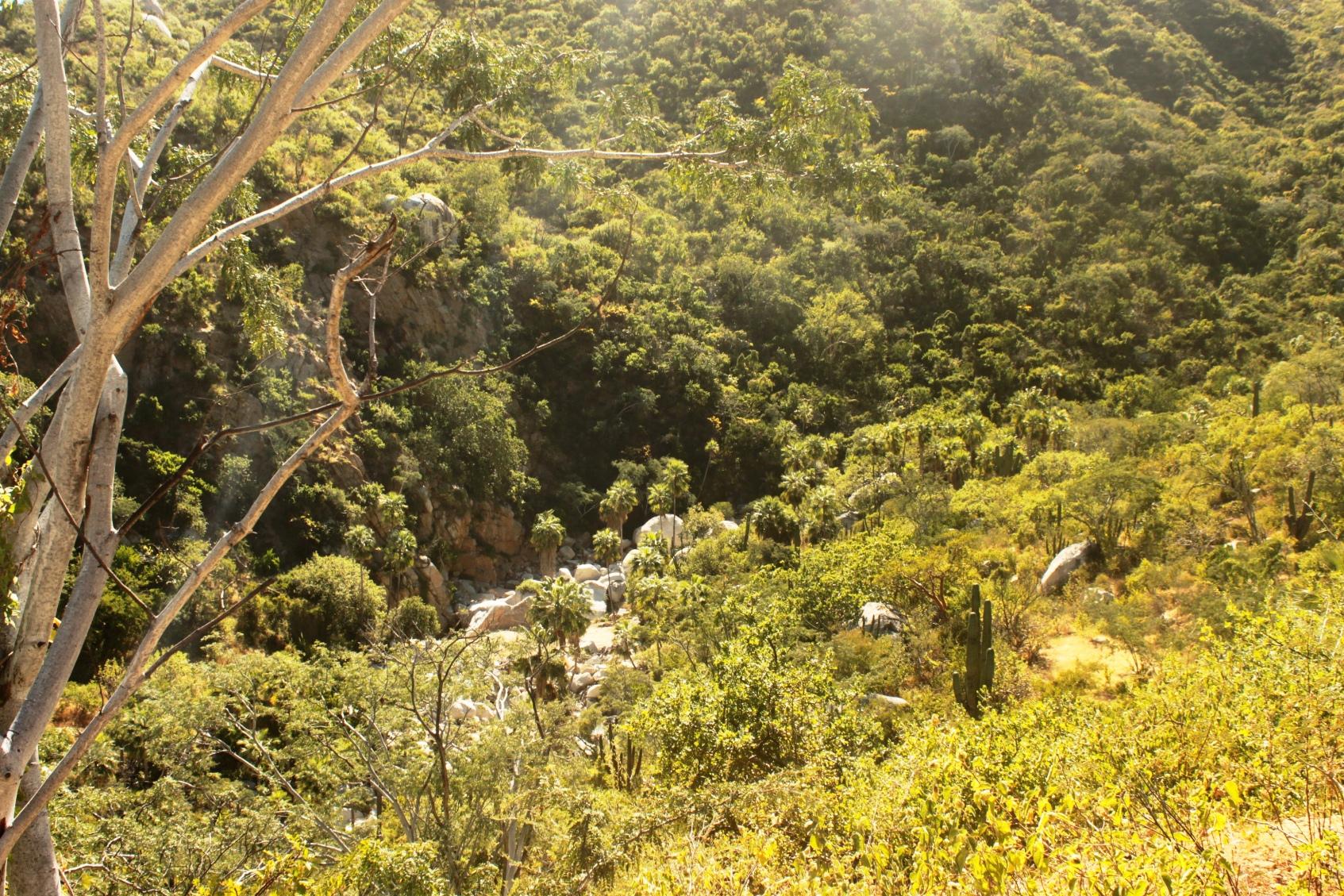 Oasis Canoas Rancho Cacachilas (1).JPG