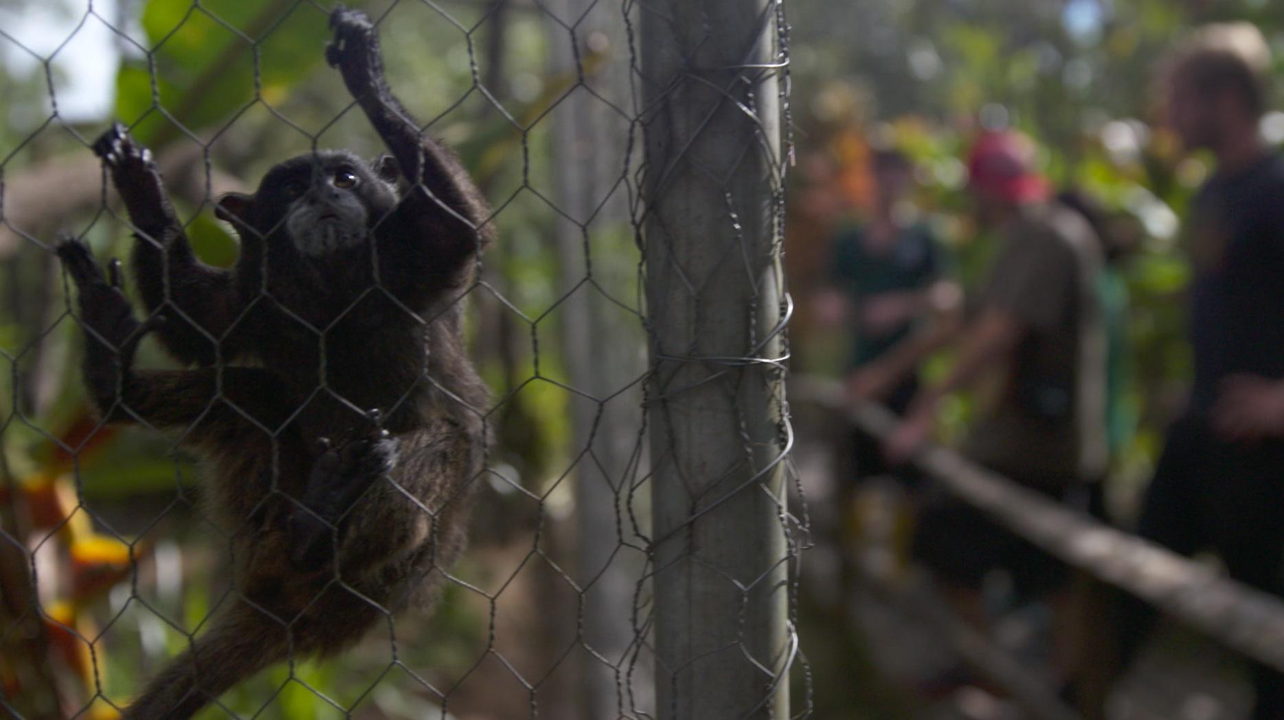Ecuador Volunteer Animal Rescue centre.jpg
