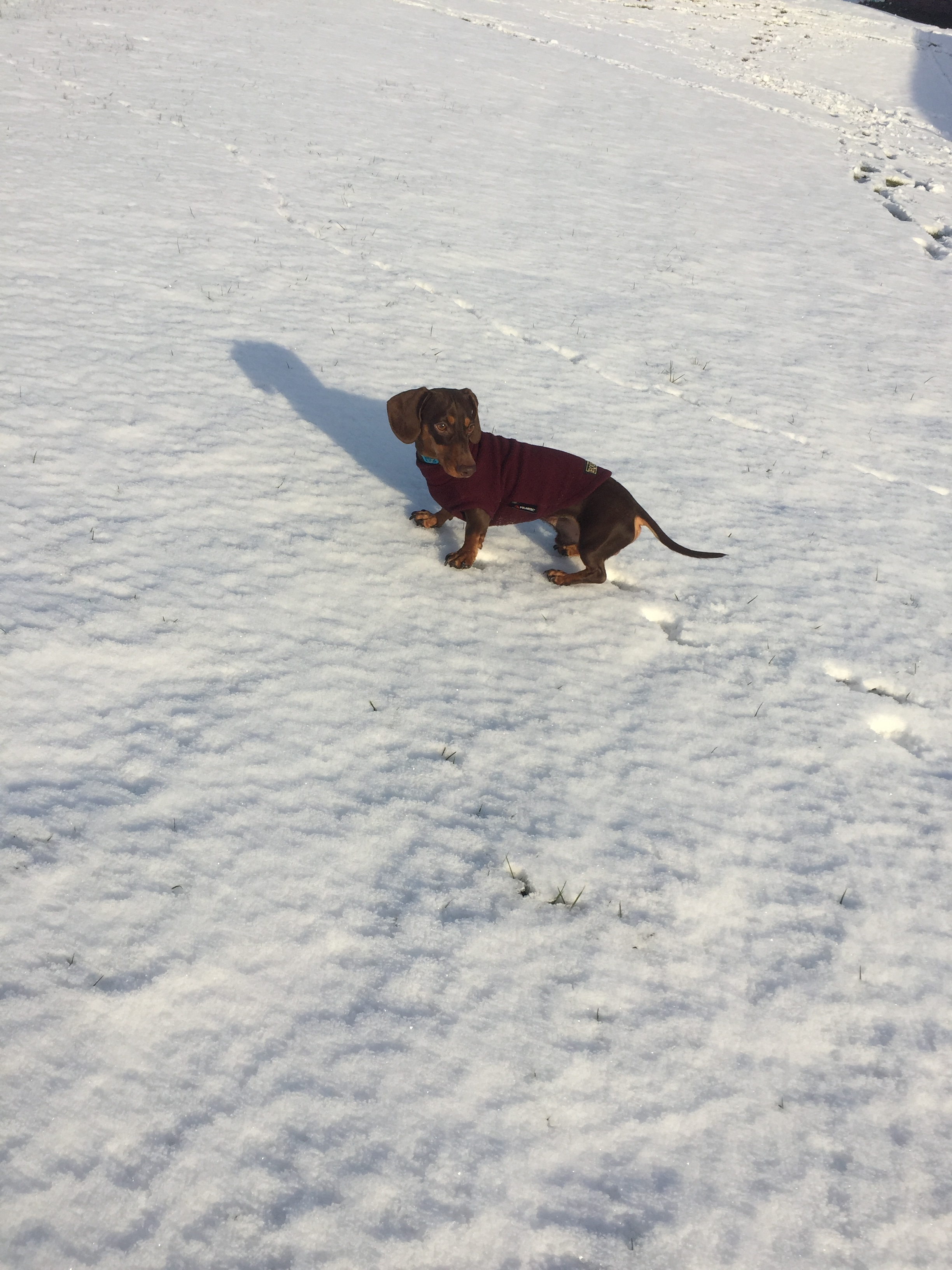 Ernie having fun in the snow outside one of our Barns last winter