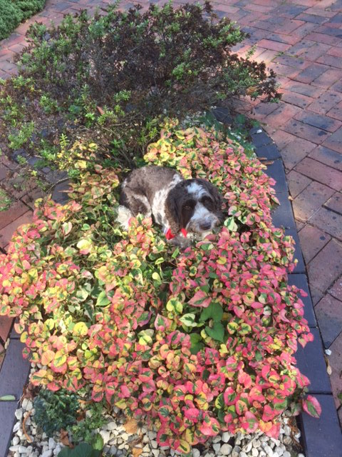 Shell enjoying a game of hide and seek in the flower beds