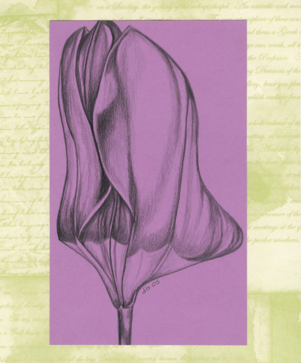 Tulip, ebony on paper