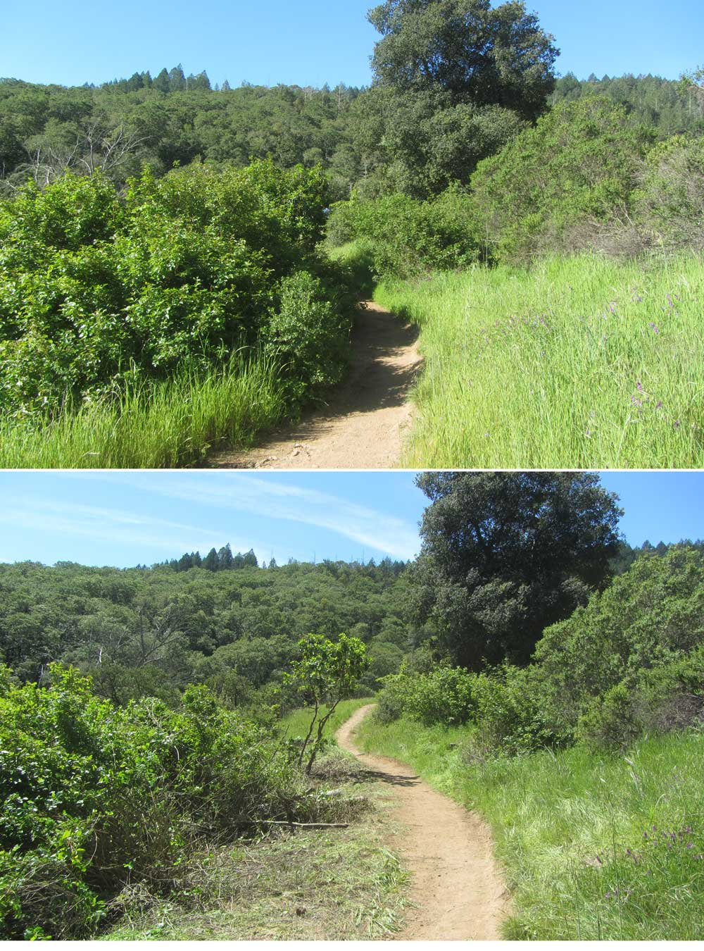 Lanwdale_Before-After-1w.jpg