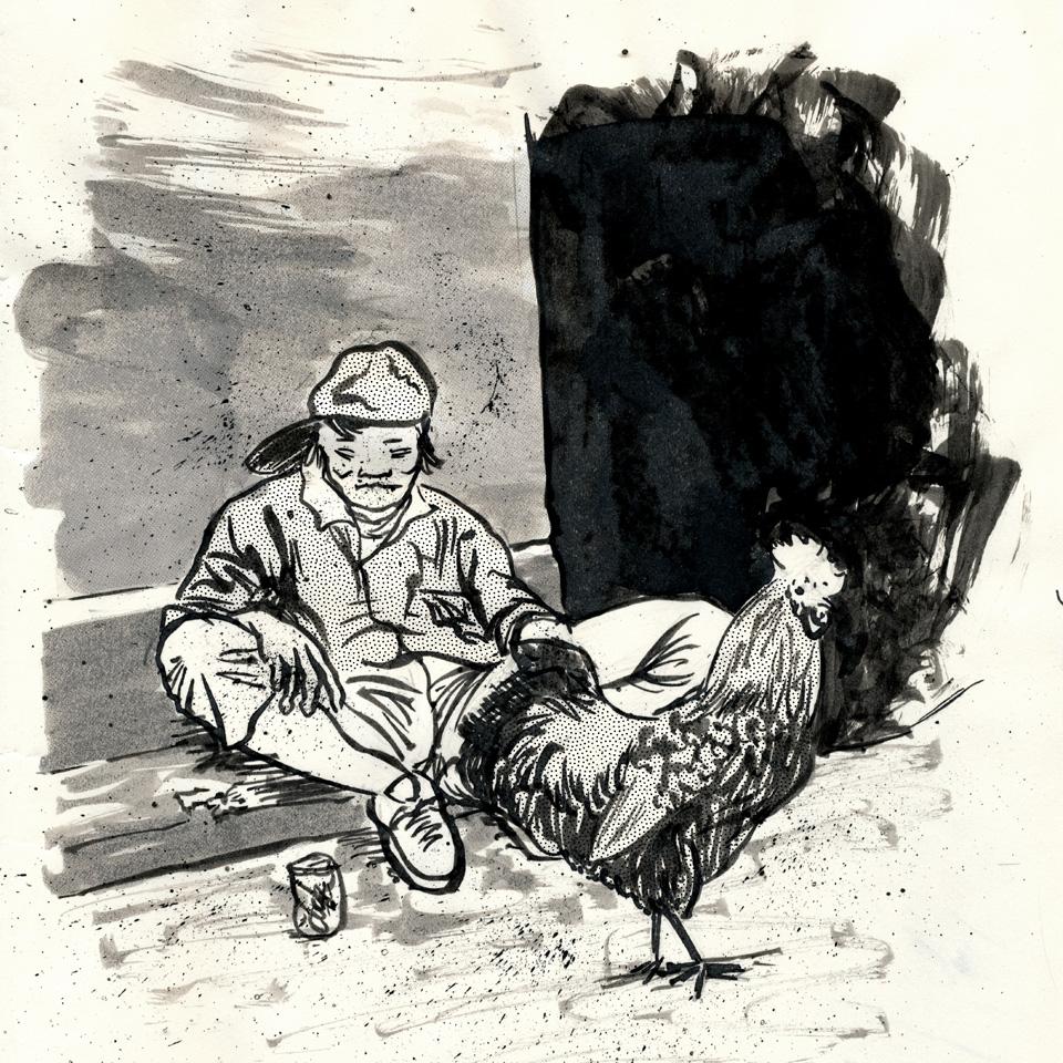 ms003sq-poor-rooster.jpg