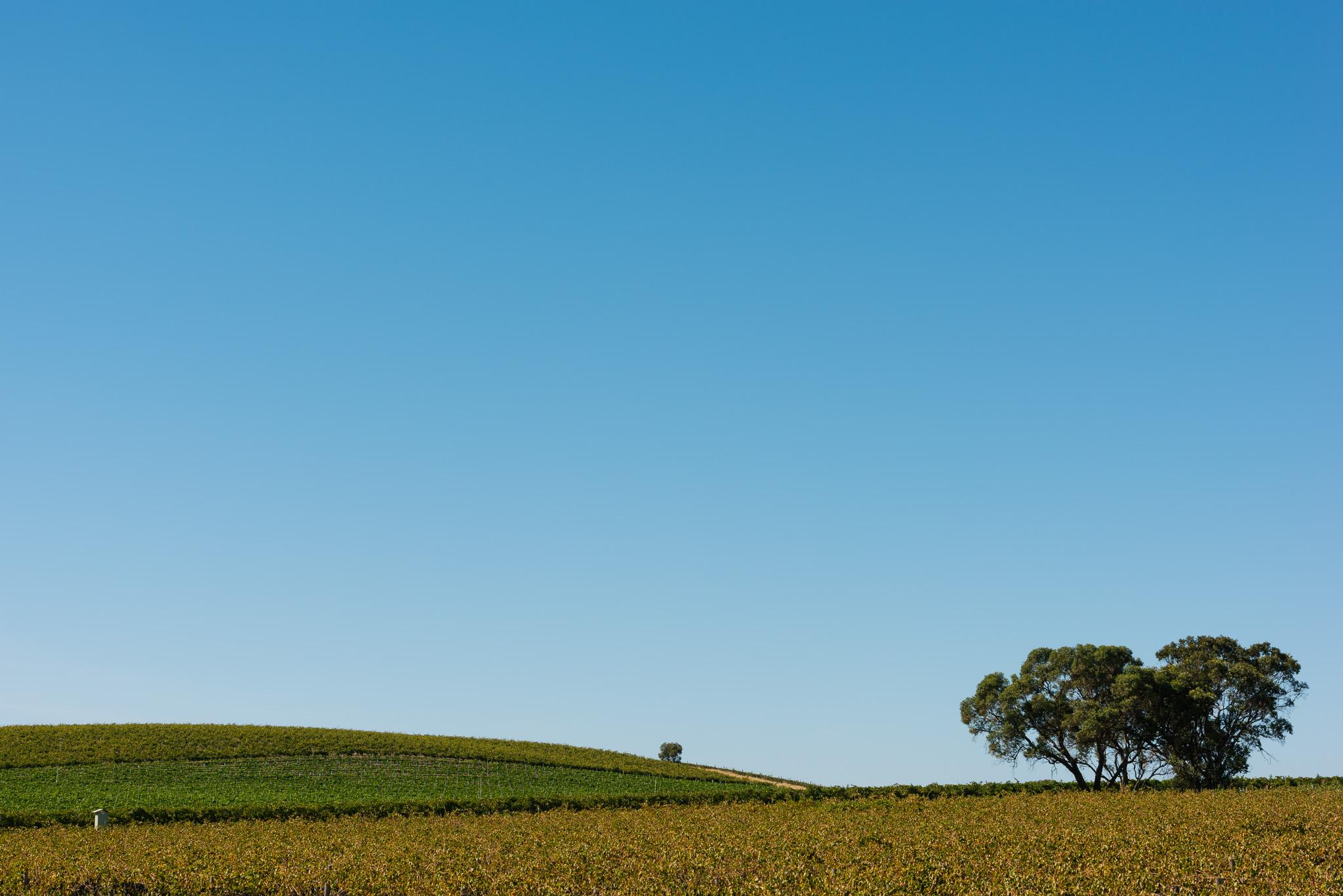 Whistler Wines Vintage 2018 - Daniel Purvis - _DSC5375.jpg
