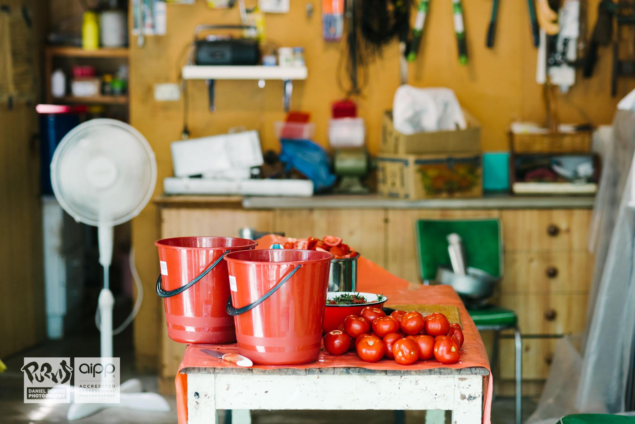2019 Tomato Day - Daniel Purvis_DSC4974.jpg