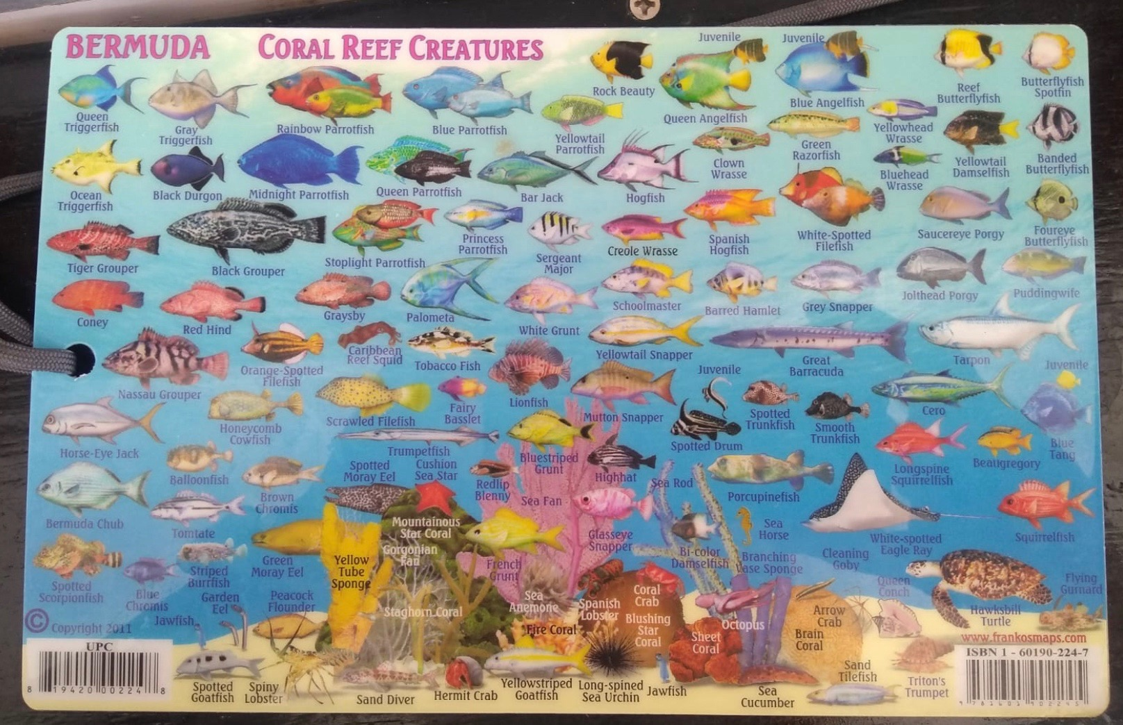 As soon as I was back on the catamaran, I looked up the names of all the fish and corals I could remember on the captain's fish card.