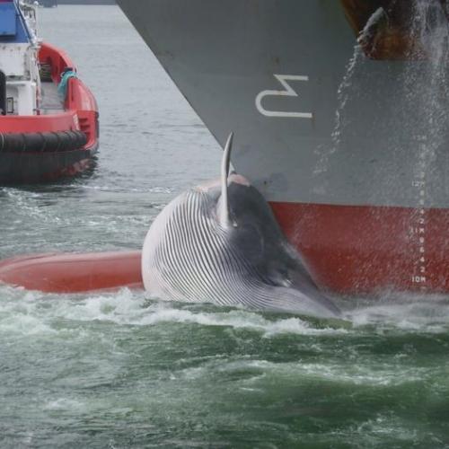 maersk dead whale.jpg