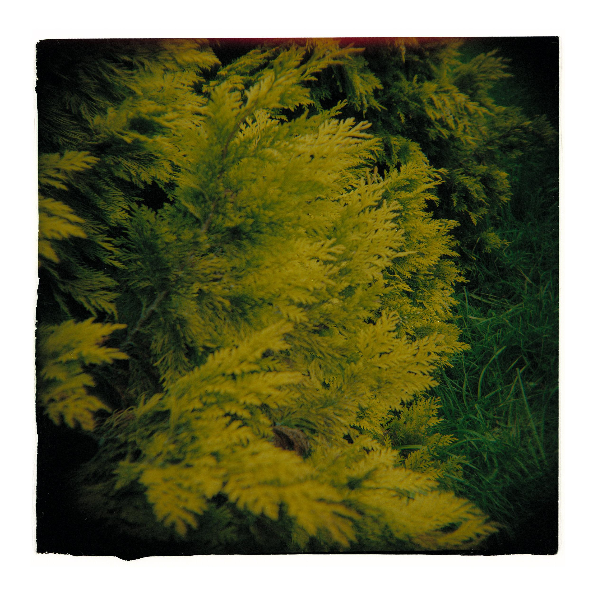 london green.jpg