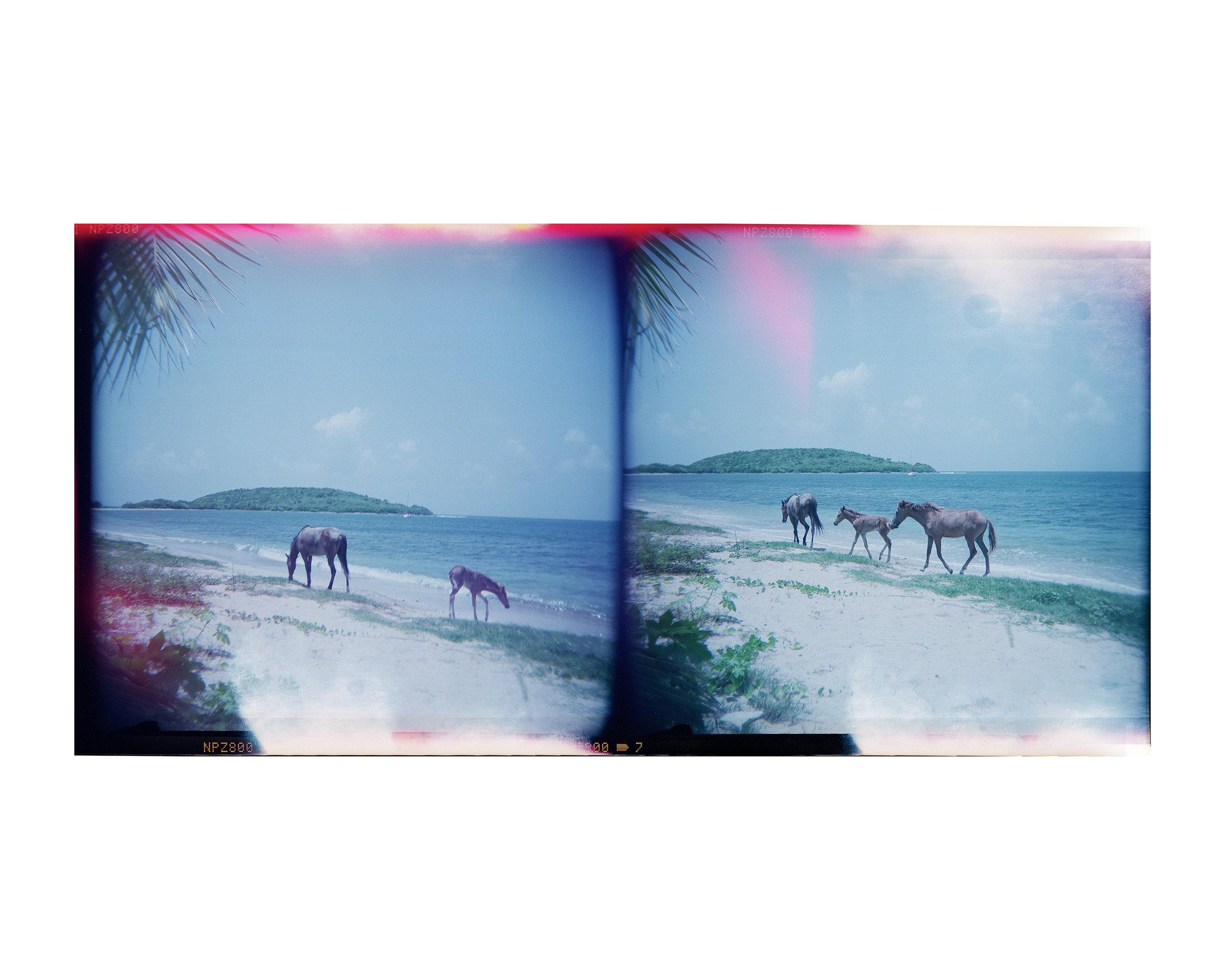 horses main 12web.jpg