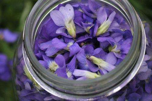 VioletsCloseUP-3.jpg