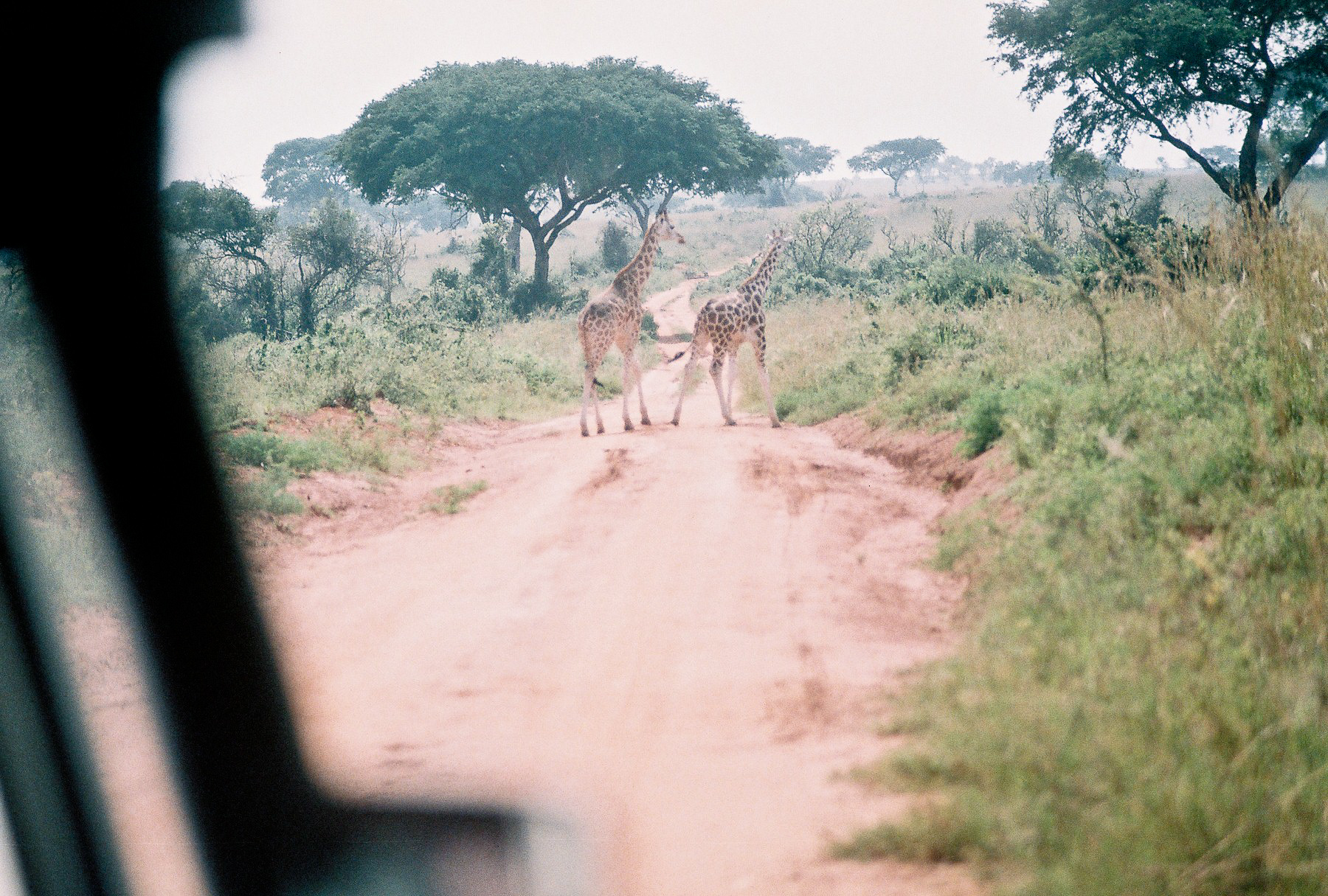 Safari_ (10 of 17).jpg