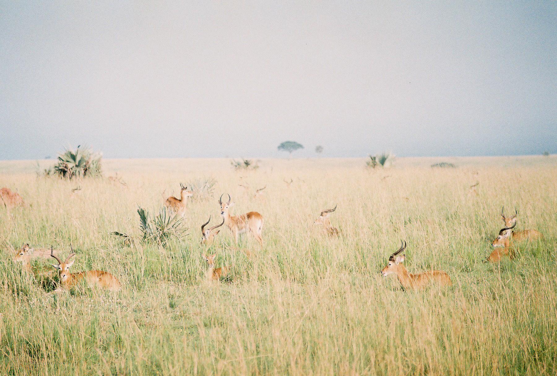 Safari_ (5 of 17).jpg
